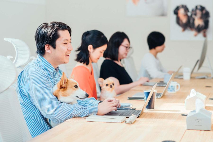 """「ハピタスポイントで殺処分される犬・猫を救う」/保護犬・猫と里親とのマッチングサービス""""OMUSUBI""""/提携への想いを事業責任者である井島七海さんに伺ってみた"""